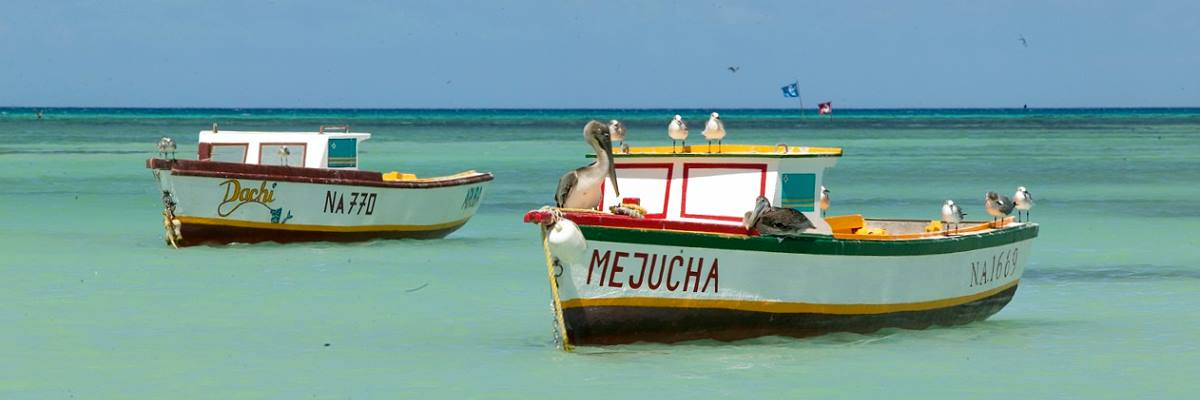 Boats of Fishermen and Pelicans